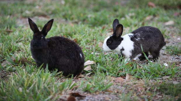 california bans animal testing