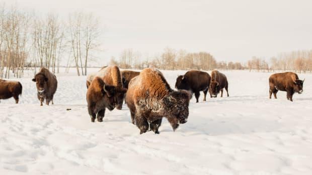 bison fiber bison wool clothing sustainable apparel
