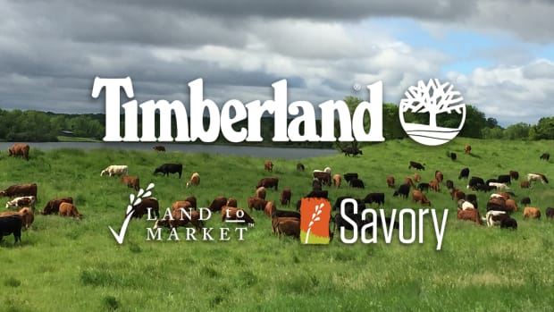 timberland regenerative agriculture savory institute