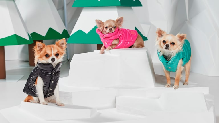 Fashion Brands Are Making Stylish Clothes for Dogs, and Millennials Are Spending Plenty of Money on Them