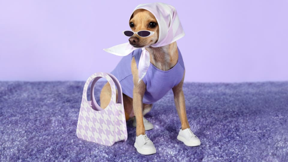 All Your New Favorite Fashion Influencers Are Dogs