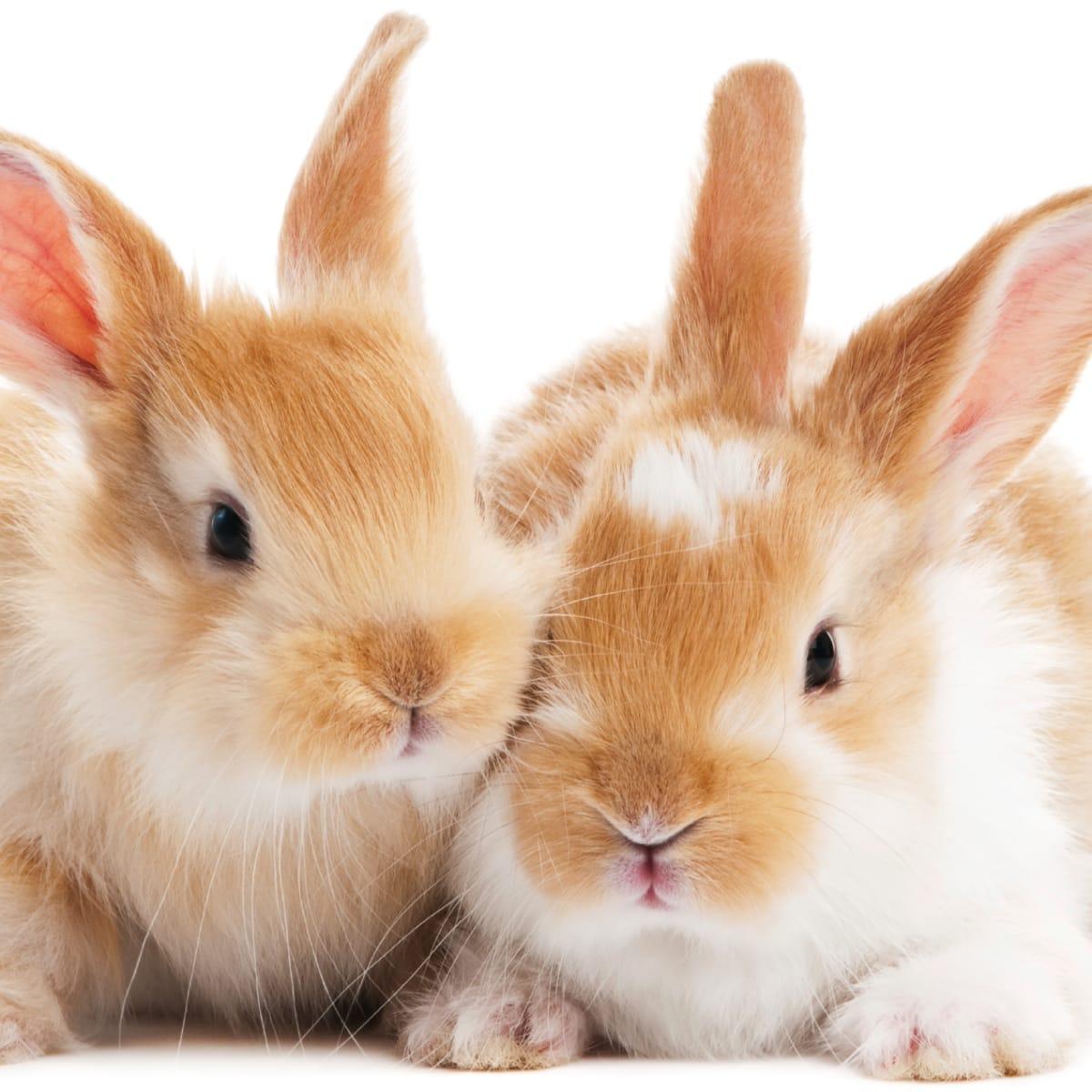 Why The U S Won T Ban Cosmetics Animal