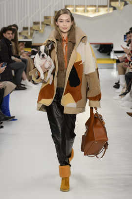 tods fall 2018 puppies 3
