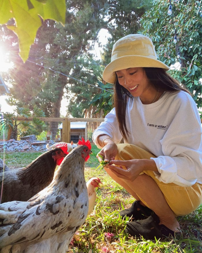 Jenny Ong feeding her chickens (and making a statement about voting).