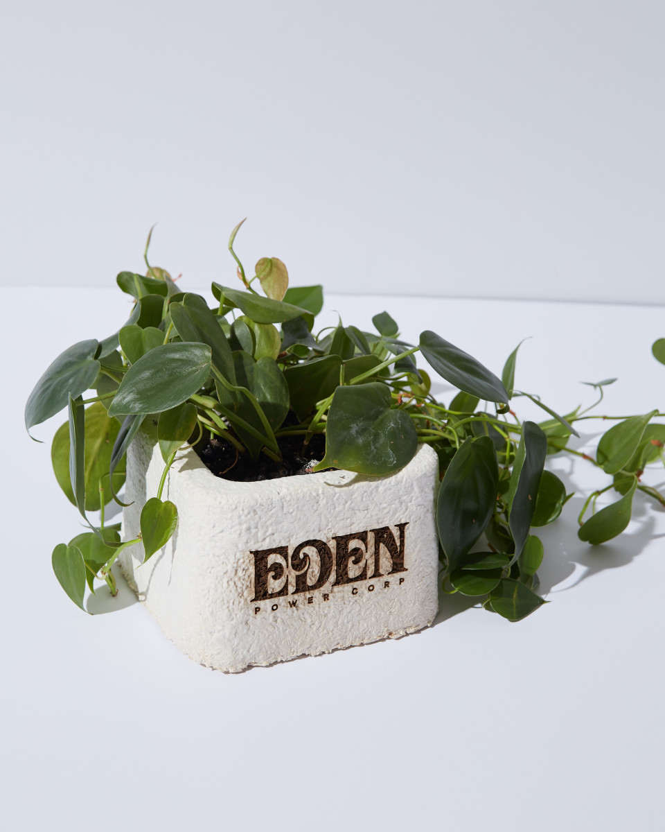 An Eden Power Corp planter made of mycelium.