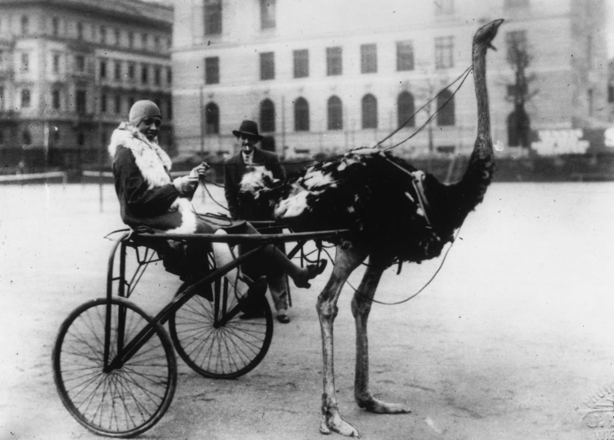 "Josephine Baker circa 1920 in an ostrich-drawn carriage, or racing ""sulky."""