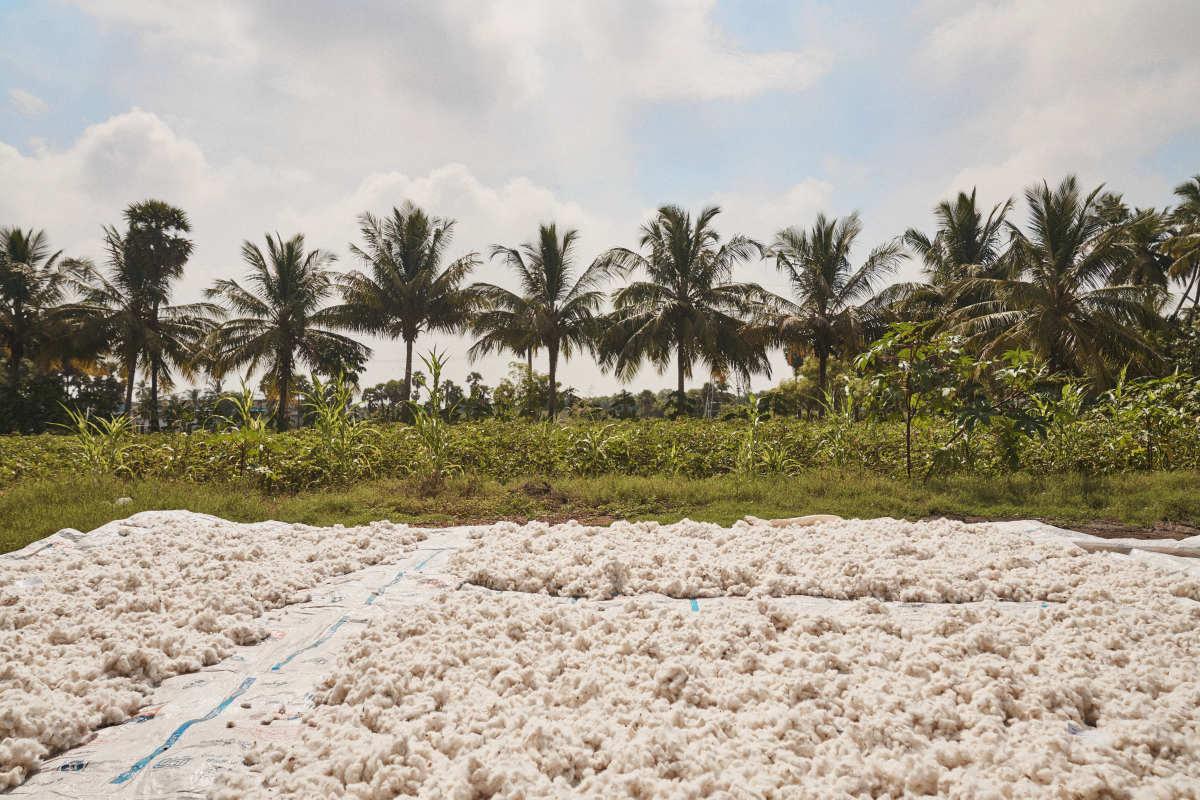 Christy Dawn and Oshadi Collective's regenerative cotton farm in Kanjikoil, Tamil Nadu, India.